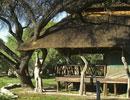 Edo's Camp