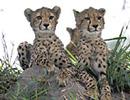 Nxabega Lodge wildlife