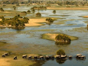 okavango elephants