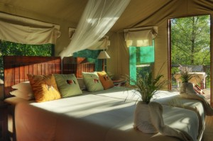 Camp Moremi luxury camps