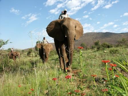 Abu Camp Elephant Safari Botswana