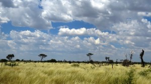 Living deserts of the kalahari