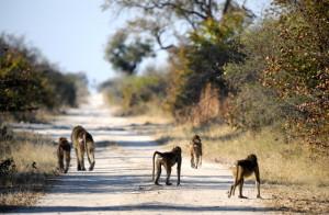 botswana wilderness safari