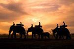 Elephant Safari in Botswana