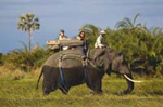Riding on an Elephant