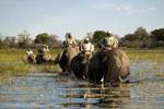 Group Elephant Safari