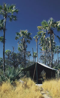 Jacks Camp flora