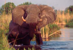 Kwara Camp wildlife
