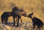 Jacks Camp wildlife