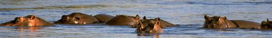 Chobe Mowana Lodge rhino